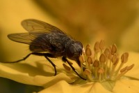 Flue på buskmure (1250 ISO, 1/320 f/10)