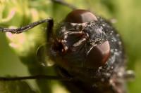 Flue på tuja (ISO 1250, 1/40 f/10)